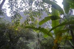 salah satu ciri lingkungan yang sehat adalah ketika disekitar rumah kita masih banyak pohon yang tumbuh dengan suburnya.